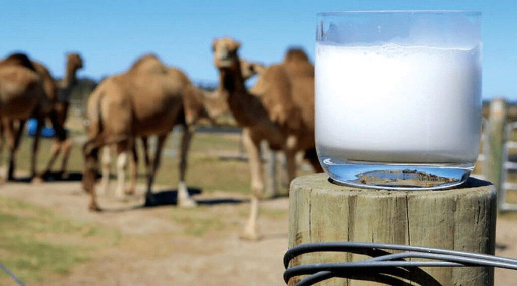 Camel Milk Autism