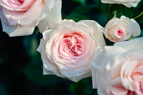 Five Most Fragrant Flowers that Make People The Happiest